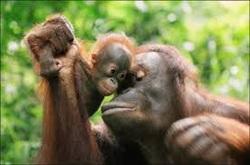 scimmie attacc
